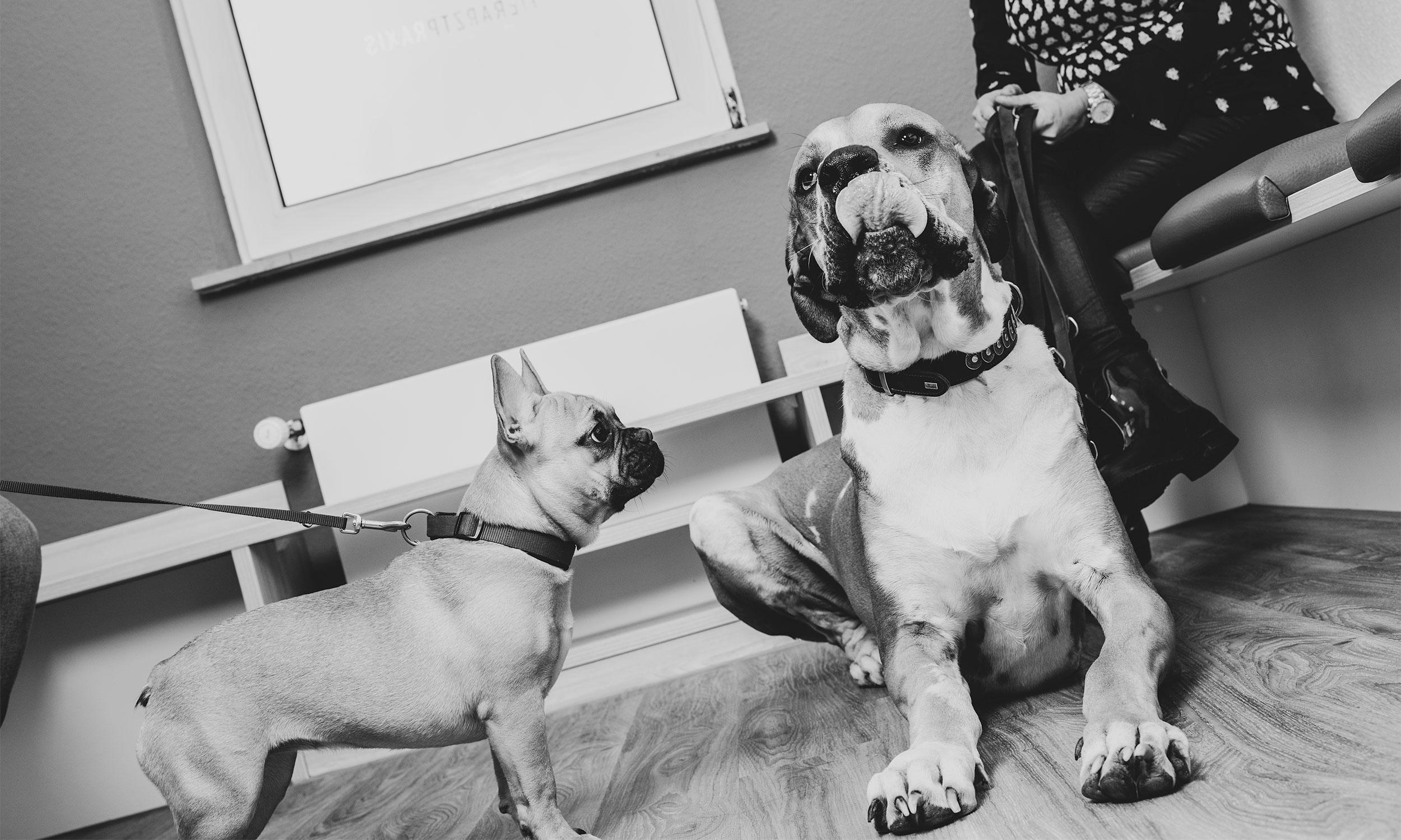 Tierarzt Essen: Kleintierpraxis für Hunde, Katzen und Nagetiere